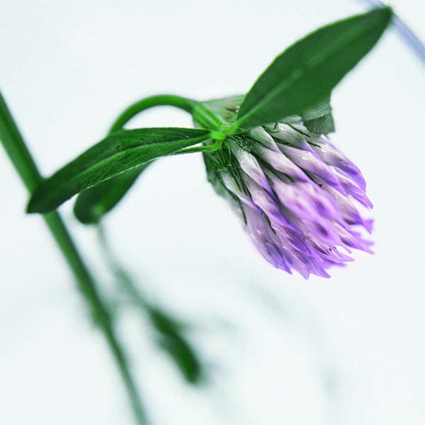 màdara-organic-ingriedents